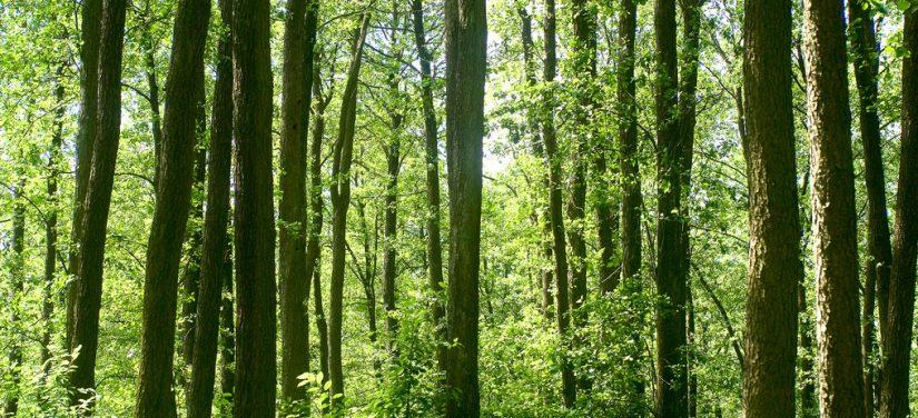 Forestry exploitation platform (F-TEP)