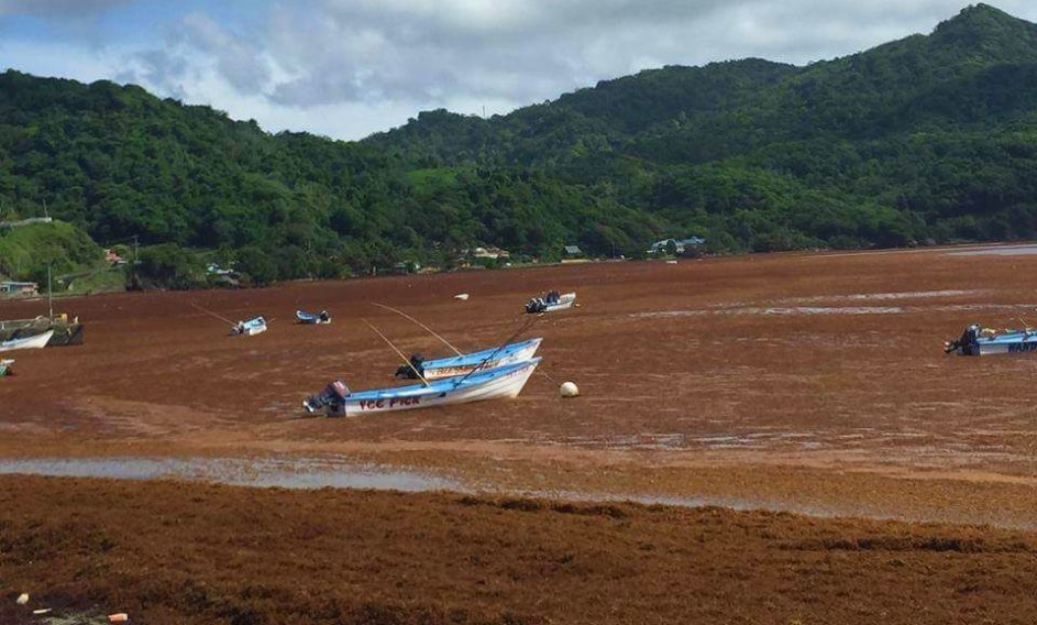 Monitoring sargassum drift with Sentinel-3 and MODIS - eo science